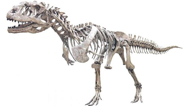 Loài khủng long 70 triệu tuổi kì lạ thay răng nhanh như cá mập - 1