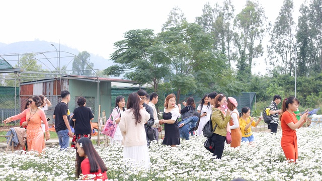 """Du khách hào hứng """"check – in"""" vườn cúc hoạ mi đầu tiên tại Đà Nẵng - 2"""