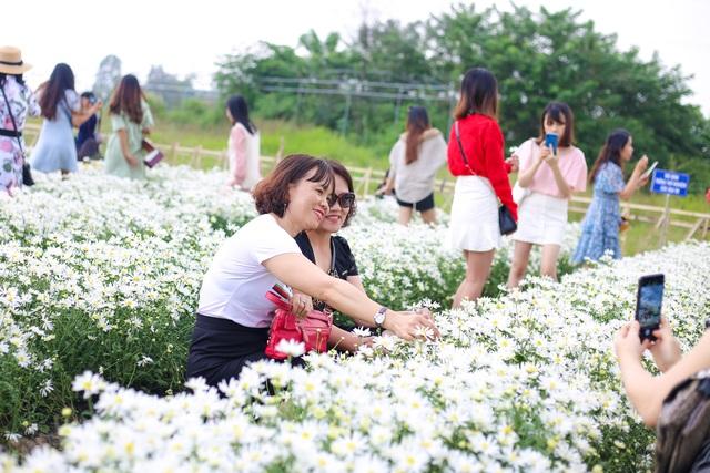 """Du khách hào hứng """"check – in"""" vườn cúc hoạ mi đầu tiên tại Đà Nẵng - 9"""