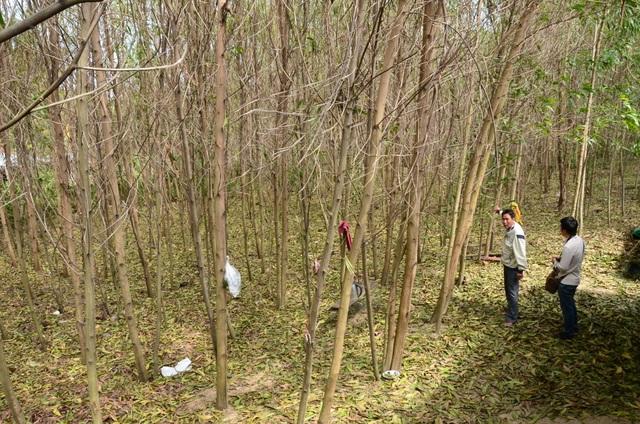 Chưa xác định nguyên nhân cây héo úa bất thường quanh dự án thép Hòa Phát - 1
