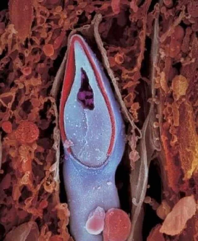 Những bức ảnh đáng kinh ngạc về sự phát triển của thai nhi trong bụng mẹ - 5