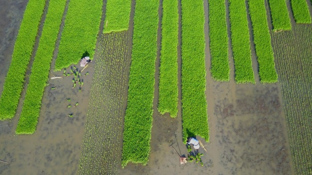 Châu Á cần 800 tỷ USD để đối phó với cuộc khủng hoảng lương thực - 1