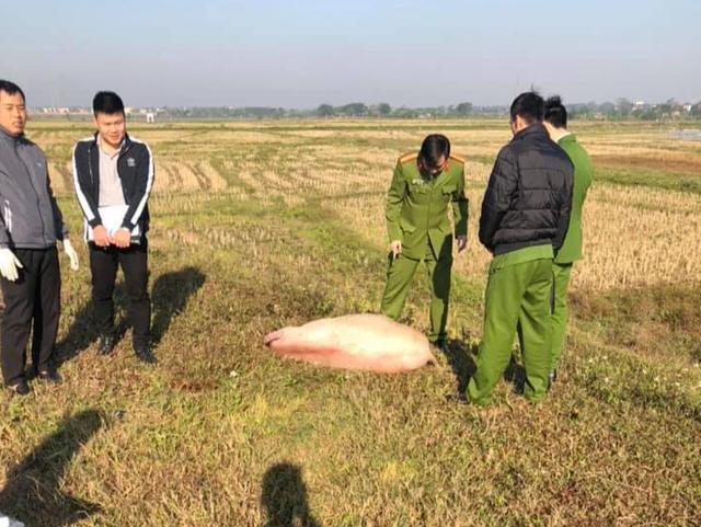 Bị công an truy đuổi, kẻ trộm nghi bỏ lợn chạy lấy người - 1