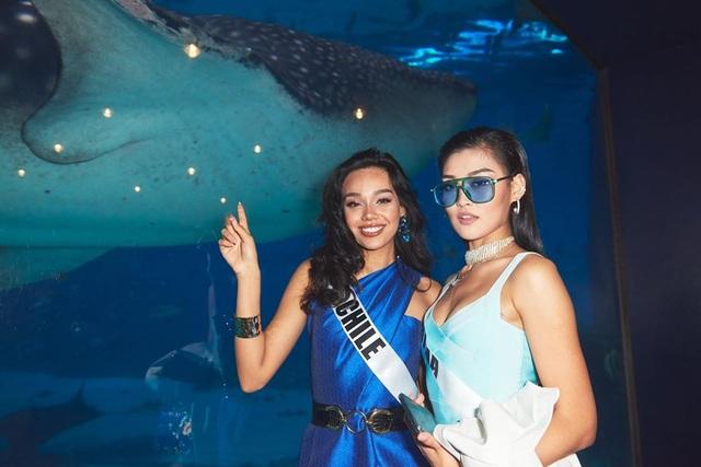 Ra mắt mẫu vương miện mới dành cho Hoa hậu Hoàn vũ 2019 - 22