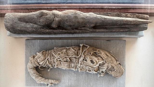 Kỳ lạ xác ướp sư tử, cá sấu, mèo trong các kim tự tháp Ai Cập - 2