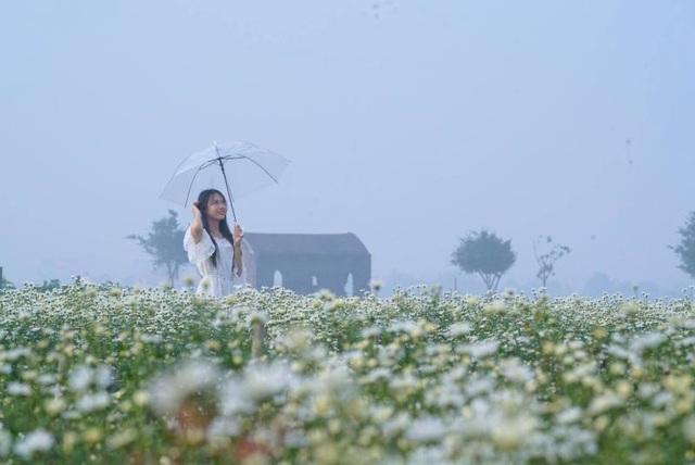 """Bạn trẻ đổ xô đến vườn cúc họa mi """"độc nhất"""" Nam Định chụp ảnh - 8"""