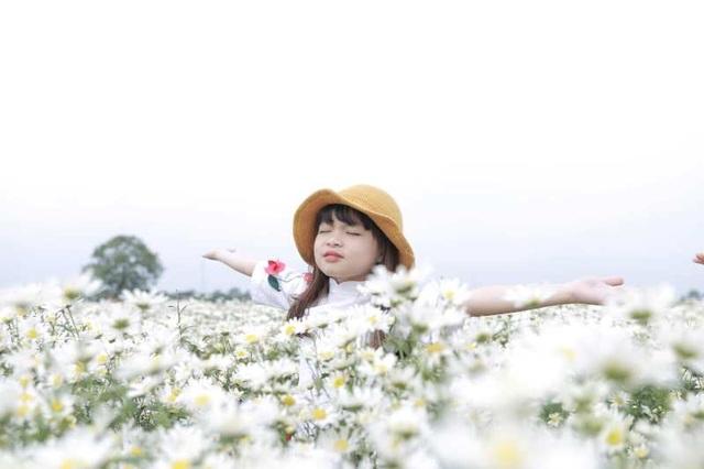 """Bạn trẻ đổ xô đến vườn cúc họa mi """"độc nhất"""" Nam Định chụp ảnh - 9"""