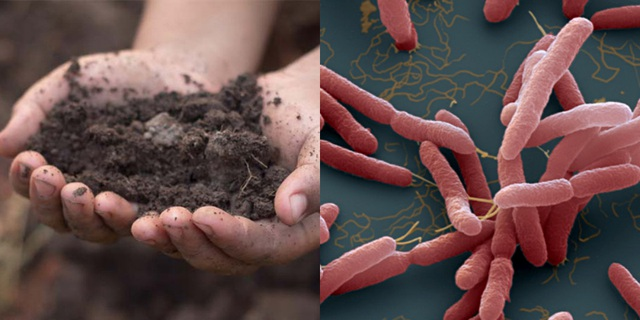 Phát hiện 1 mẫu đất có khuẩn Whitmore tại gia đình có 3 trẻ tử vong - 2