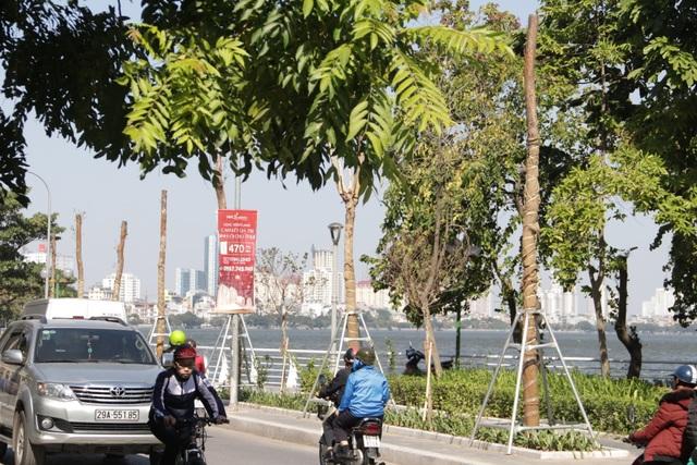 Hà Nội: Diện mạo mới của phố Trích Sài sau khi đánh chuyển 96 cây hoa sữa - 2