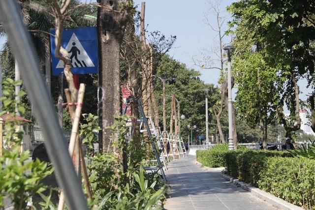 Hà Nội: Diện mạo mới của phố Trích Sài sau khi đánh chuyển 96 cây hoa sữa - 4
