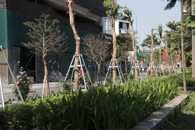 Hà Nội: Diện mạo mới của phố Trích Sài sau khi đánh chuyển 96 cây hoa sữa - 3