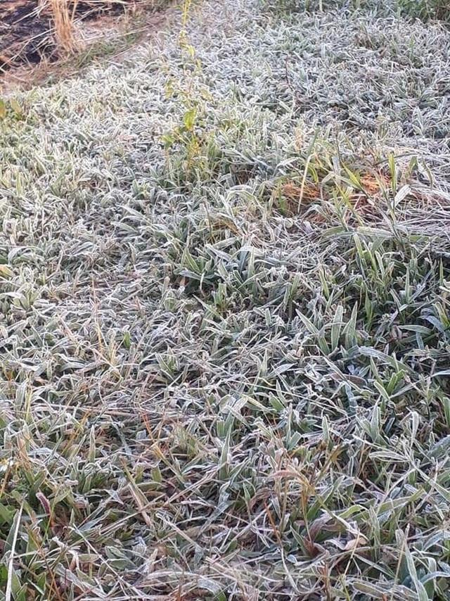 Sương muối phủ trắng cánh đồng ở Lạng Sơn trong cái rét căm căm - 1