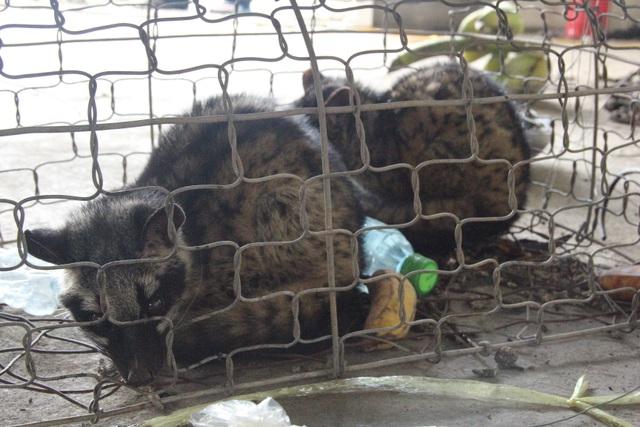 Được giải cứu khỏi xe buôn, số động vật hoang dã lại nằm chờ chết trong... kho hải quan - 2