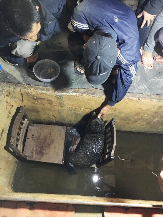 Ngư dân cứu cá thể hải cẩu dạt vào bờ biển - 2