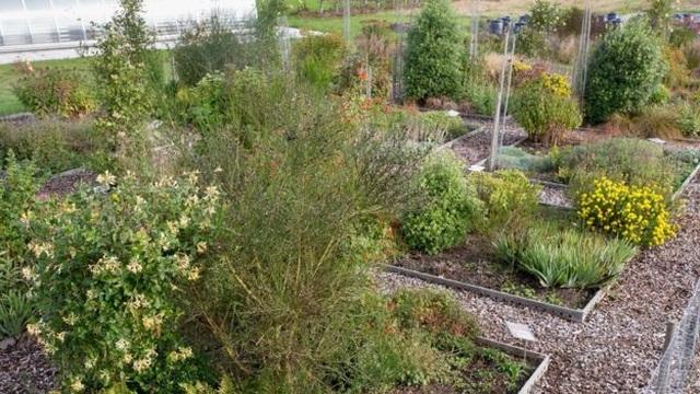 Vườn cây như thế nào sẽ thu hút được nhiều côn trùng? - 2
