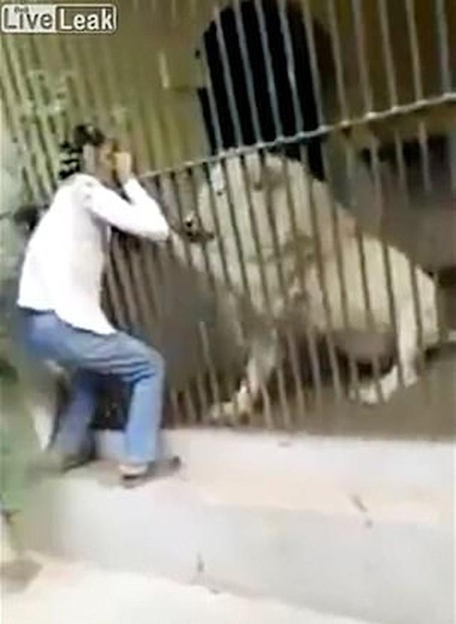 Kinh hoàng khoảnh khắc nhân viên sở thú Pakistan bị sư tử trắng tấn công - 1