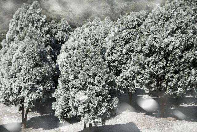 """Giới trẻ đổ xô về rừng bách xanh phủ tuyết trắng ở Ba Vì check-in """"sống ảo"""" - 2"""