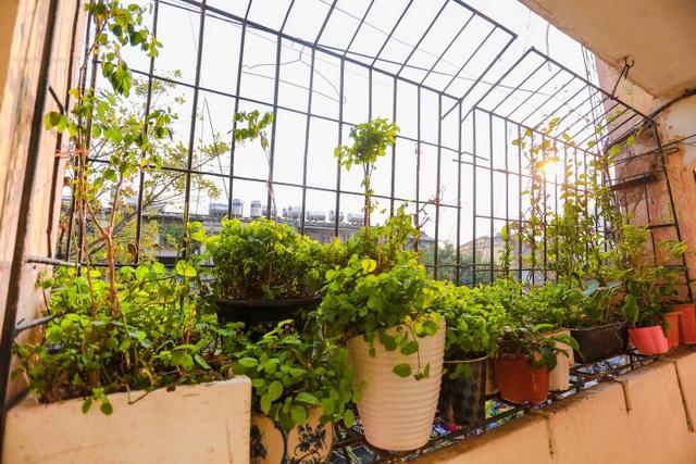 Dân Thủ đô cải tạo ban công nhà cũ thành các khu vườn treo lãng mạn - 10