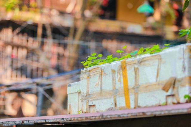 Dân Thủ đô cải tạo ban công nhà cũ thành các khu vườn treo lãng mạn - 12