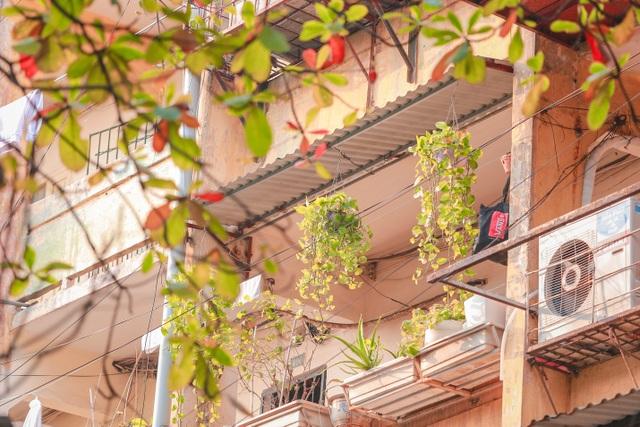 Dân Thủ đô cải tạo ban công nhà cũ thành các khu vườn treo lãng mạn - 13