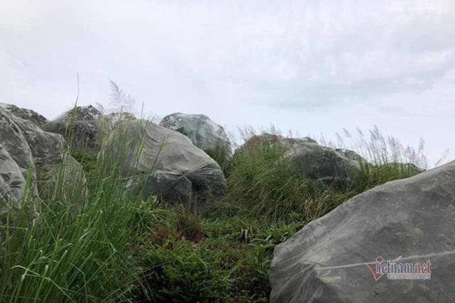 Đồi cam 6 tỷ đồng kỳ lạ nhất Việt Nam, 2.000 cây mắc màn trắng cả rừng - 12