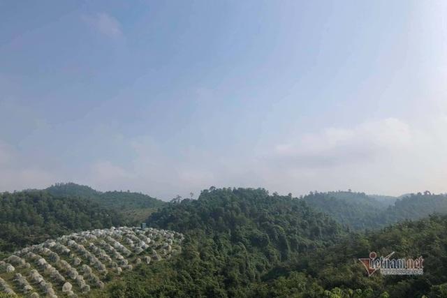Đồi cam 6 tỷ đồng kỳ lạ nhất Việt Nam, 2.000 cây mắc màn trắng cả rừng - 1