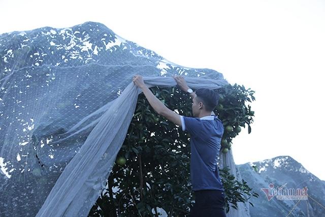 Đồi cam 6 tỷ đồng kỳ lạ nhất Việt Nam, 2.000 cây mắc màn trắng cả rừng - 4