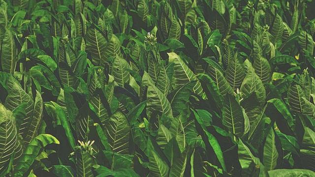 Thực vật cũng có thể phát ra âm thanh khi bị căng thẳng - 1