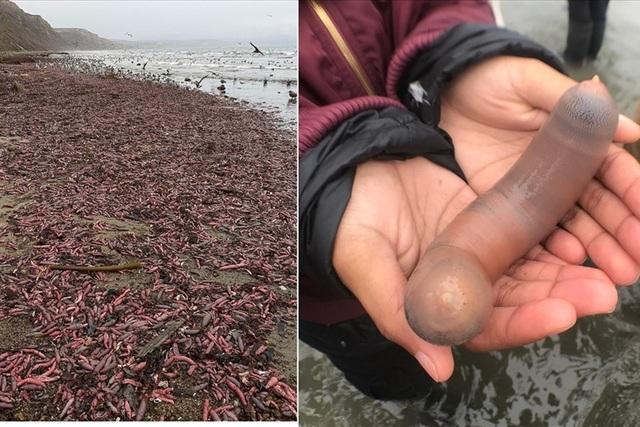 Hàng ngàn con cá hình thù lạ dạt vào bờ biển Mỹ - 1