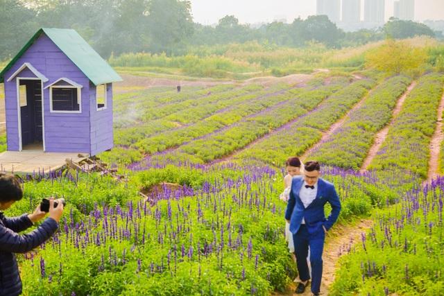 Lạc vào cánh đồng hoa Nữ hoàng xanh lãng mạn như châu Âu giữa lòng Hà Nội - 6