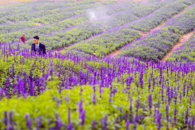 Lạc vào cánh đồng hoa Nữ hoàng xanh lãng mạn như châu Âu giữa lòng Hà Nội - 9