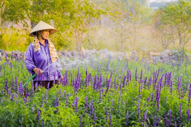 Lạc vào cánh đồng hoa Nữ hoàng xanh lãng mạn như châu Âu giữa lòng Hà Nội - 12