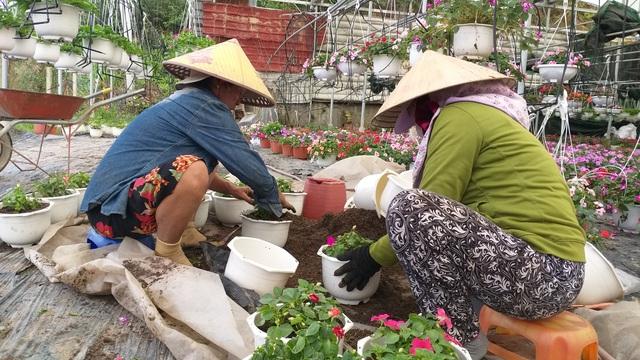 Hoa Tết được giá, nông dân phấn khởi - 3