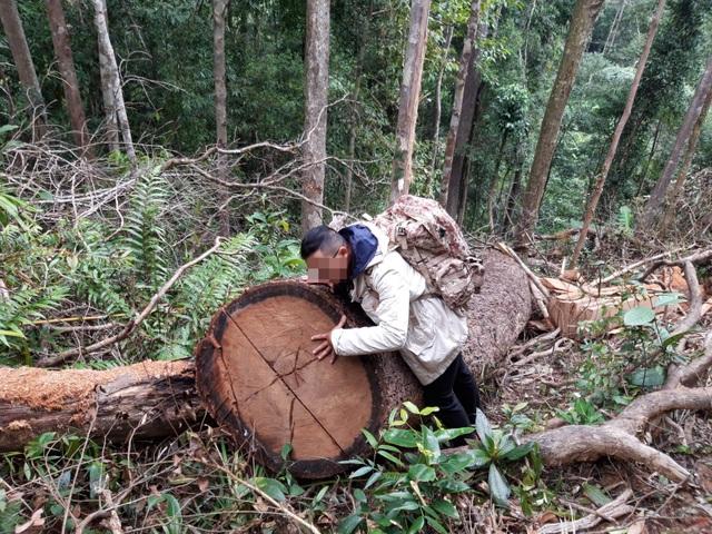 """Núp bóng lấy gỗ làm nhà, lâm tặc mở """"công trường khai thác gỗ tại Kon Tum! - 4"""