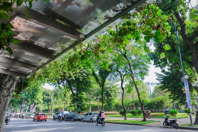 """Người Hà Nội thích thú với những """"khu vườn treo"""" ấn tượng trên nóc trạm chờ xe buýt - 11"""