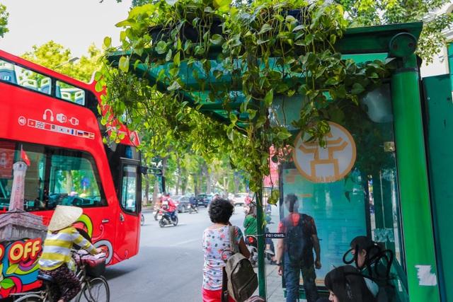 """Người Hà Nội thích thú với những """"khu vườn treo"""" ấn tượng trên nóc trạm chờ xe buýt - 3"""