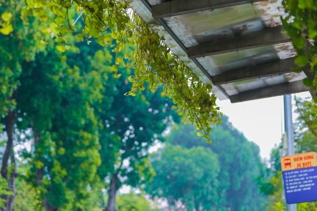 """Người Hà Nội thích thú với những """"khu vườn treo"""" ấn tượng trên nóc trạm chờ xe buýt - 5"""