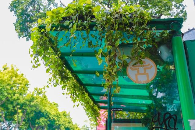 """Người Hà Nội thích thú với những """"khu vườn treo"""" ấn tượng trên nóc trạm chờ xe buýt - 7"""