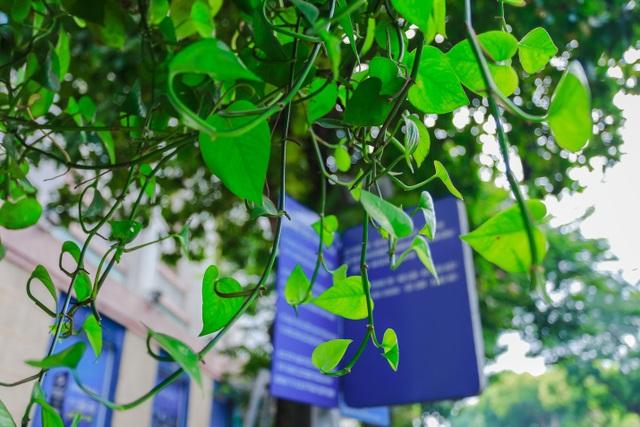 """Người Hà Nội thích thú với những """"khu vườn treo"""" ấn tượng trên nóc trạm chờ xe buýt - 9"""