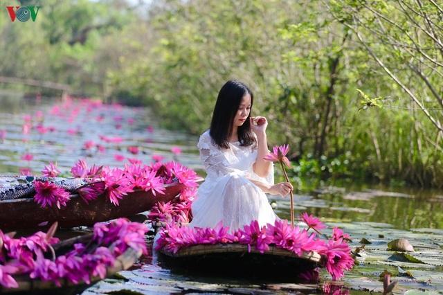 Hoa súng chùa Hương đẹp nao lòng giữa mùa đông - 8