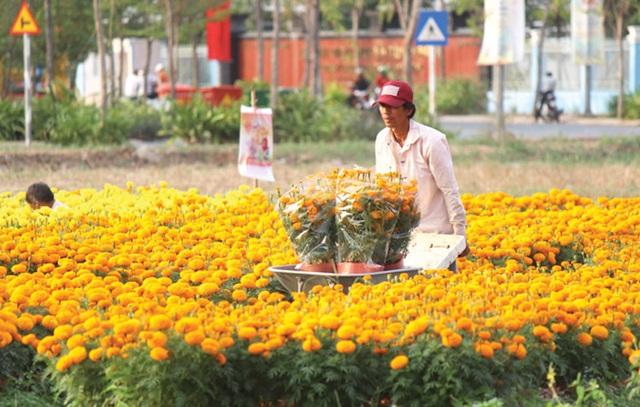 TPHCM: Đất nông trường quy hoạch thành khu công nghiệp mới - 1