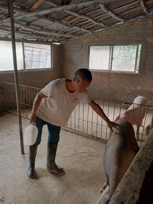 """Trung Quốc lao đao vì """"cơn bão"""" dịch tả lợn - 3"""