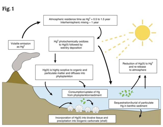 Trái Đất đã nhiễm độc thủy ngân nặng nề trước khi va chạm thiên thạch Chicxulub - 3