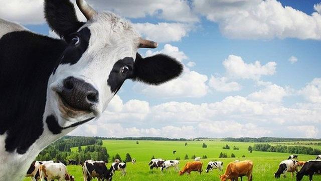 """Thêm một vụ thâu tóm """"thần tốc"""" vào hôm qua: Vinamilk đã kiểm soát Sữa Mộc Châu? - 1"""