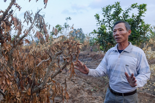 Nông dân Hưng Yên khóc hết nước mắt, nhìn vườn cây ăn quả bị đốt trụi - 11