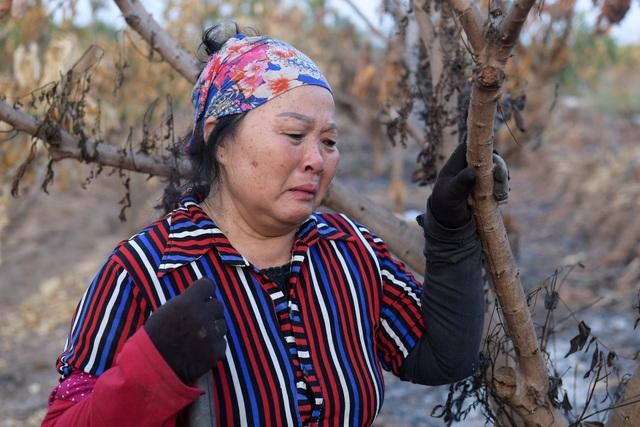 Nông dân Hưng Yên khóc hết nước mắt, nhìn vườn cây ăn quả bị đốt trụi - 4