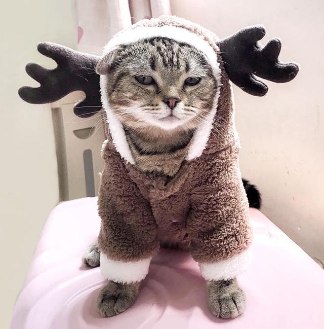 Chủ nhân rút hầu bao, chi đậm sắm đồ Noel cho thú cưng - 3