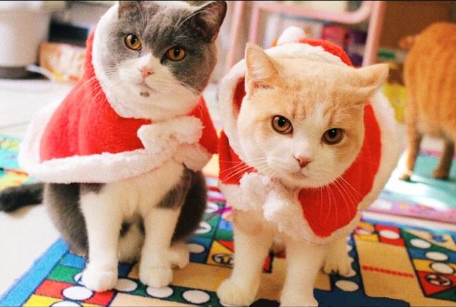Chủ nhân rút hầu bao, chi đậm sắm đồ Noel cho thú cưng - 4