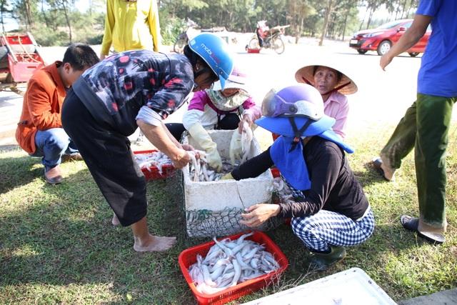 Ngư dân kiếm tiền triệu từ cá khoai những ngày cuối năm - 5