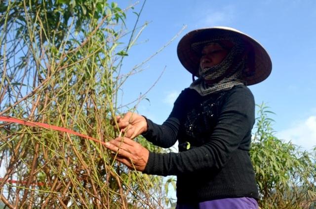 """Người trồng đào tuốt lá, tỉa cành … thấp thỏm """"ngóng"""" thời tiết - 8"""